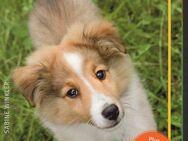 Hunde-Clicker-Box - Plus Clicker für sofortigen Spielspaß - Spraitbach