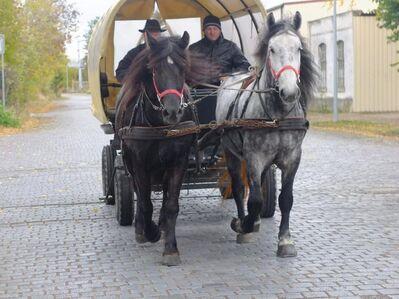 Gespann Arbeitspferde! - Buttstädt