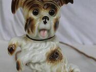 Porzellan Tierfigur Rauchverzehrer Hund beleuchtet aus Omas Haushalt - Hennef (Sieg) Zentrum