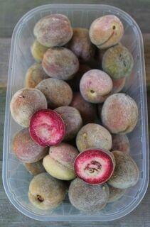 rotfleischiger Weinbergpfirsich, einheimische leckere Pfirsich-Früchte - Bad Belzig