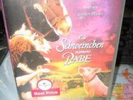 Ein Schweinchen namens Babe; Video neu orginal eingeschweißt - Bad Belzig Zentrum