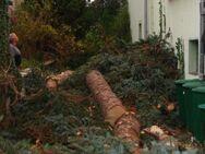 Bad Belzig und Umgebung Fällung ihrer Bäume - Bad Belzig