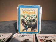 DDR Lehrquartett Geschützte Vögel / Spiel ab 10 Jahre, Pössneck Verlag 1982 - Zeuthen