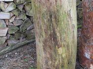 Kiefern-Hackklotz für Brennholz klein machen, 30cm Schlagfläche - Bad Belzig Zentrum