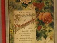 Naturgeschichte des Pflanzenreichs nach dem Linne´schen System. Nach G.H.von Schuberts Lehrbuch der Naturgeschichte, neu bearb. von Moritz Willkomm. Gebundenes Buch – 1887 von G.H.von Schubert (Autor) - Rosenheim