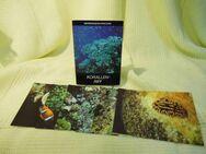 Postkarten Satz aus 6 Postkarten Meeresmuseum Stralsund, Korallenriff / DDR 1983 - Zeuthen