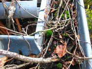 Dachrinnen-Reinigung; Laub und Schmutz aus Rinnen entfernen - Kleinmachnow