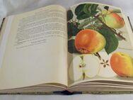 Deutschlands Obstsorten - antiquarisches Buch von 1938 - Wangen (Allgäu)