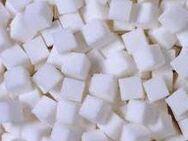 Suche Sugarbaby