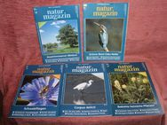 Berlin-Brandenburger Naturmagazin, kompletter 13. Jahrgang 1999 - Bad Belzig