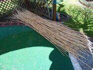 Pflanzstäbe Rankhilfe aus Riesen Chinaschilf - Kolkwitz