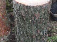 sehr breiter Kiefer-Hackklotz um selber Brennholz zu hacken - Bad Belzig Zentrum