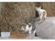 Auswilderungsplätze für scheue Katzen Kater gesucht - Issum