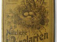 Köhlers nützliche Vogelarten und ihre Eier. Ornithologie, um 1905 - Königsbach-Stein