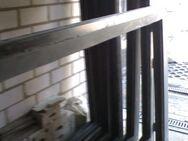 Großfenster-Rahmen,  hochwertige Alu-Anfertigungen (bis zu 4 Stck.) - Bad Salzuflen Zentrum