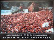 Sechs Poster von der Weihnachtsinsel im Indischen Ozean - Frankfurt (Main) Sachsenhausen-Süd
