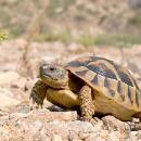 Schildkrötennachwuchs