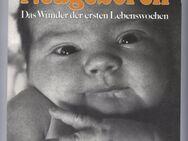 Neugeboren Das wunder der ersten Lebenswochen - Marshall H.Klaus / Phyllis H.Klaus - Nürnberg