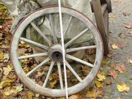 Holzwagenrad aus Holz: Höhe 0,93m u. 1,25m - Langgöns