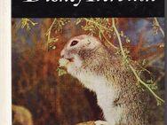 Das Große Disney Tierbuch von Walt Disney - Spraitbach