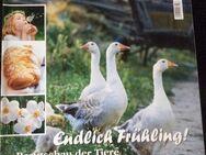 mein schönes Land    Ausgabe  Frühling 2010 - Gladbeck