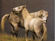 Pferde von Sayer, Angela - Spraitbach