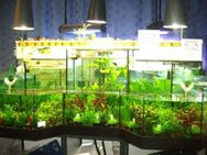 Wasserpflanzenaktionen am 09.01.21 und 30.01.21 !! - Lübeck