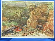 Alte Tier Postkarte - Wuppertal