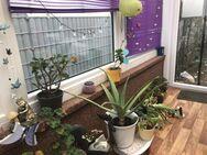 Aloe Vera grosse Zimmerpflanze - Plaidt