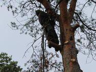 Baum-Notdienst, Sturm-Schadensbeseitigung, Gefahrenbaum-Fällung in Bad Belzig und Umgebung - Bad Belzig