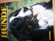 Hunde: Abstammung, Anschaffung, Erziehung, Pflege, Rassen usw. - Rees Zentrum