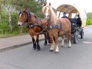Schönes Gespann Arbeitspferde! - Buttstädt