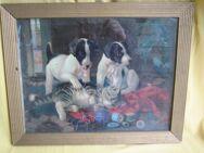 Wandbild: Hundewelpen und Katze mit Wolle spielend - Bad Belzig Zentrum