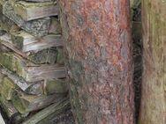 Kiefern-Hackklotz für Brennholz klein machen, 28cm Schlagfläche - Bad Belzig Zentrum