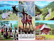 Farbige Mehrmotiv Ansichtskarte- Schwarzwald - Niederfischbach