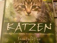 Katzenbuch alles über Rassen,Erziehung u.s.w - Zerbst (Anhalt) Zentrum