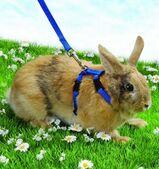 """Trixie Geschirr für Kaninchen mit 2 Leinen """" NEU """""""