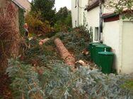 Brennholz von Baumfällungen in Niemegk und Umgebung zum selber aufarbeiten - Niemegk