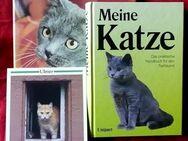 3 tolle Bücher über Katzen und deren Haltung - Niederfischbach