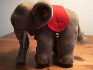 Steiff Elefant - Köln