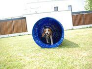 Schule für Hunde & Welpen