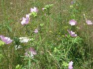 wilde Malveblüten Tee, Rohkostqualität gesammelt im Naturpark - Bad Belzig Zentrum