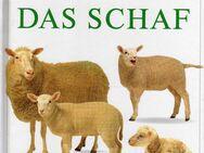 """Tierkinder """"Das Schaf"""" - Sarstedt"""