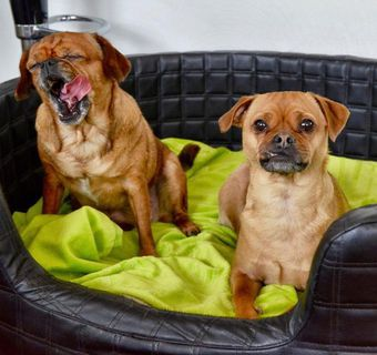 Gassi & More ! Ihre Hundepension in Mainz! - Mainz