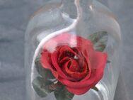Glas Flasche Shell Petroleum Lichtpetroleum Lampe mit Rose - Verden (Aller)