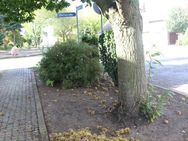Deutsche frische Qualitäts Esskastanien aus der Mark Brandenburg - Bad Belzig Zentrum