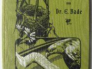 Die mitteleuropäischen Vögel. Naturgeschichte, Lebensweise, Jagd, von 1904 - Königsbach-Stein