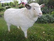 Schaf mollig lebensgroß Dekofigur Gartendeko Deko - Hergisdorf
