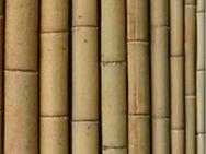Bambusstangen Bambusstäbe Bambusrohr Tonkinstäbe Pflanzstäbe ca. 1 - 3 m Höhe in div. Stärken auch Wunschgrößen ab 1 - 3 € als Rankhilfe Spalier oder zu Dekozwecken * bis 1,20 m Länge auch Versand - Schellerten