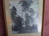 Waldfotografie schwarz-weiß im verglasten Holzrahmen - Bad Belzig